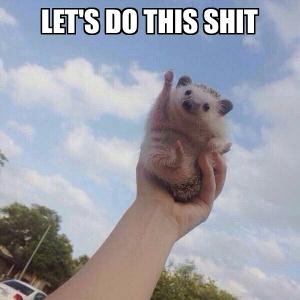 Let do this shit hedgehog meme