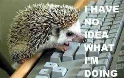 Hedgehog I have no idea